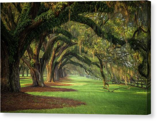 Avenue Of Oaks Canvas Print