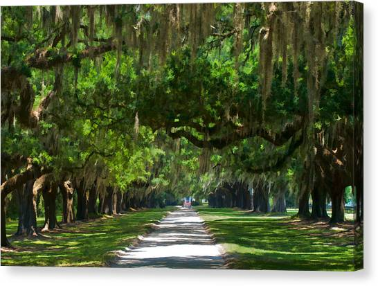 Avenue Of The Oaks At Boonville Plantation Canvas Print