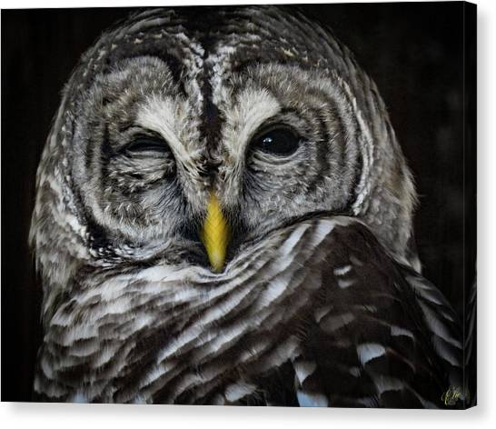 Avery's Owls, No. 11 Canvas Print