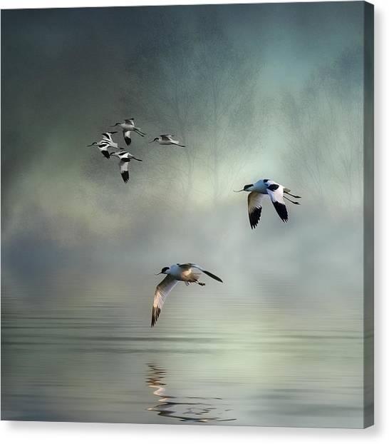 Avocet Dawn Canvas Print