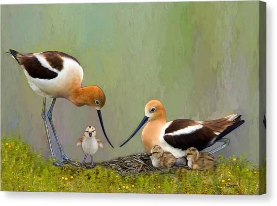 Avocet Family Canvas Print