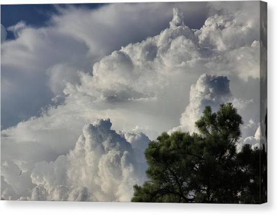 Awesome Cloulds And A Pine Tree Canvas Print by Maris Salmins