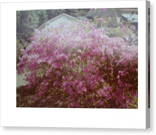 Azalea Framed By Roof Canvas Print by Hal Newhouser