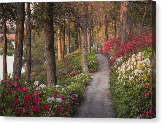 Azalea Hill Path Canvas Print