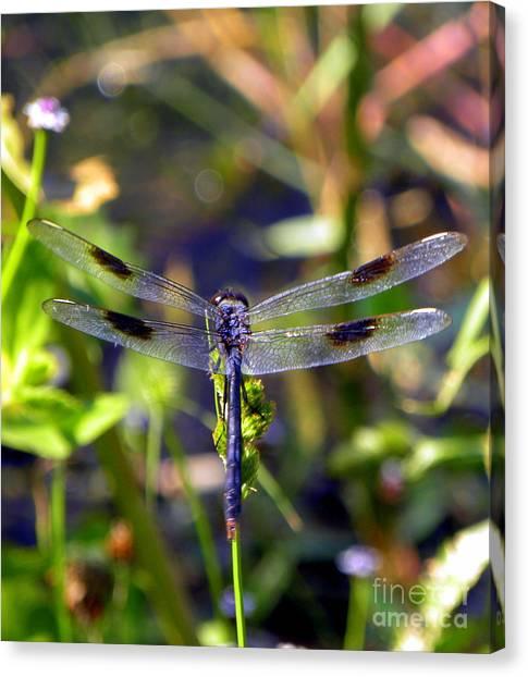 Azure Dragonfly Canvas Print