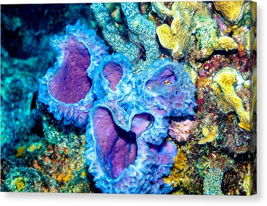 Azure Vase Sponge Canvas Prints Fine Art America