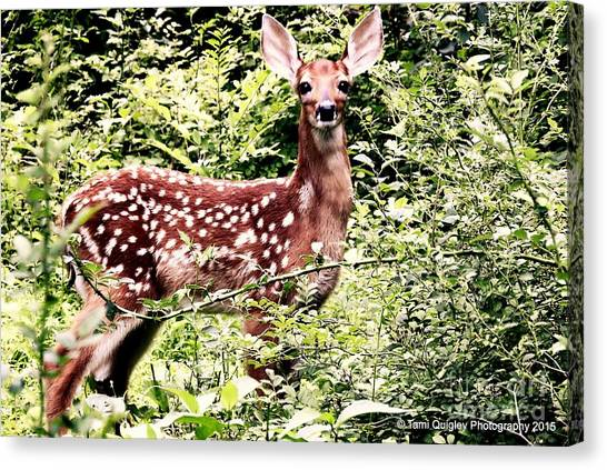 Babe In The Woods Canvas Print