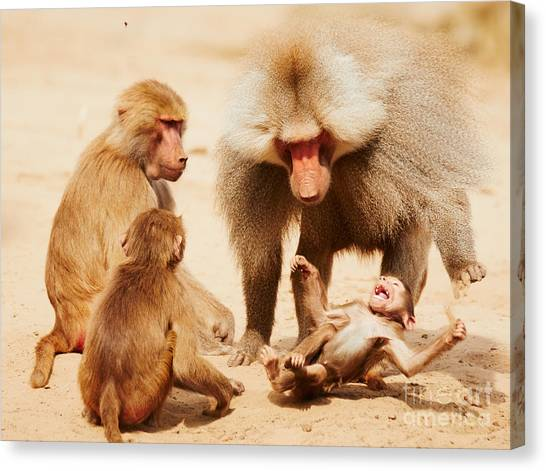 Baboon Family Having Fun In The Desert Canvas Print