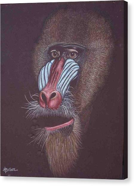 Baboon Canvas Print by Helen O Hara