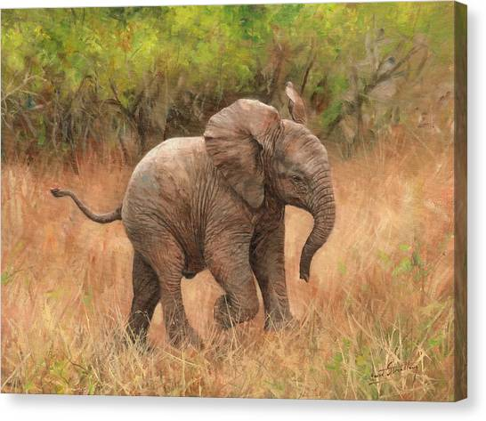 Baby African Elelphant Canvas Print