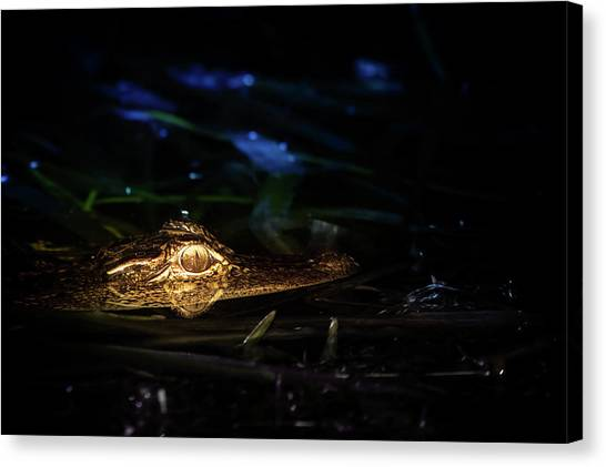 University Of Florida Canvas Print - Baby Alligator At Night by Mark Andrew Thomas