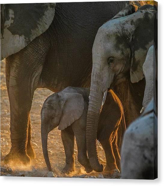 Baby And Siblings Canvas Print