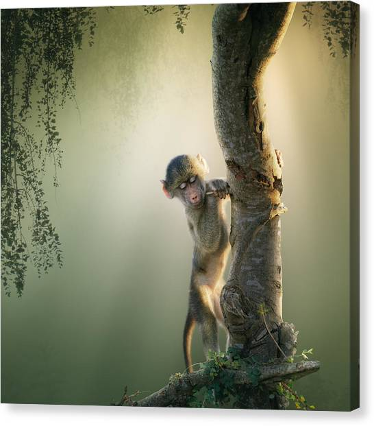 South Africa Canvas Print - Baby Baboon In Tree by Johan Swanepoel