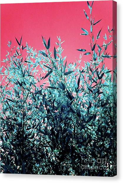 Baby Bamboo - Deep Pink And Blue Canvas Print