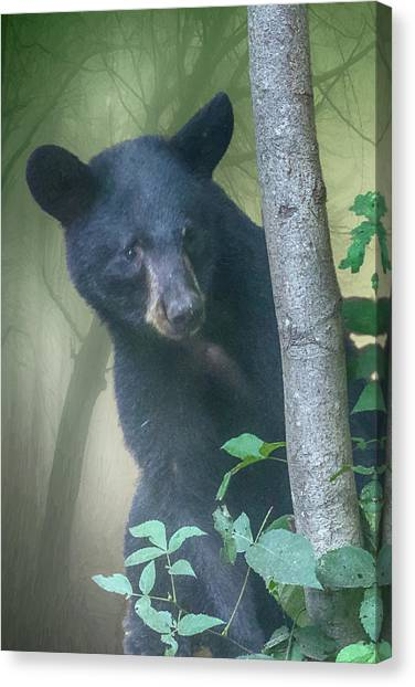Baby Bear Takes A Peek Canvas Print