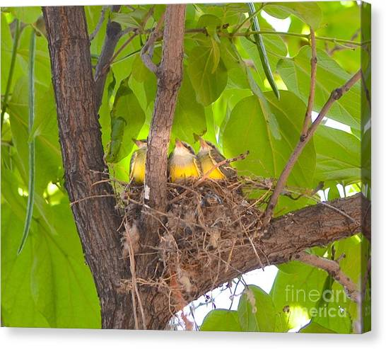 Baby Birds Waiting For Mom Canvas Print