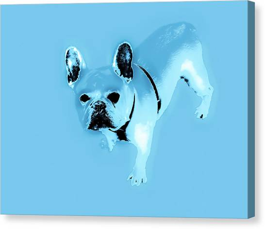 French Bull Dogs Canvas Print - Baby Blue Frenchie by Heather Joyce Morrill