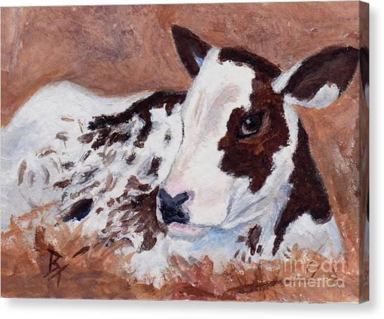 Baby Cow Aceo Canvas Print