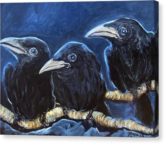 Baby Crows Canvas Print