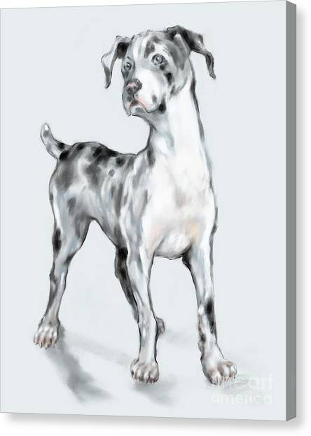 Baby Dane Canvas Print