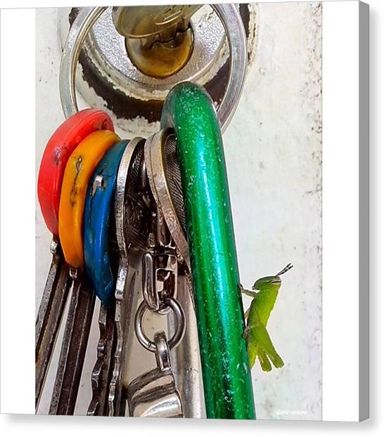 Grasshoppers Canvas Print - Baby by David Cardona