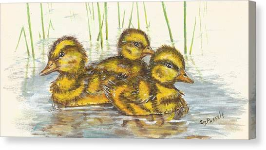 Baby Ducks For Ma Canvas Print