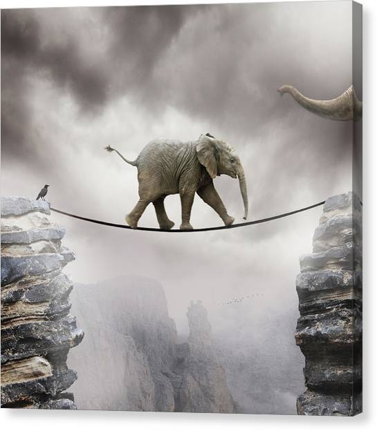 Elephants Canvas Print - Baby Elephant by by Sigi Kolbe