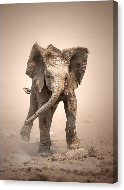 Adorable Canvas Print - Baby Elephant Mock Charging by Johan Swanepoel