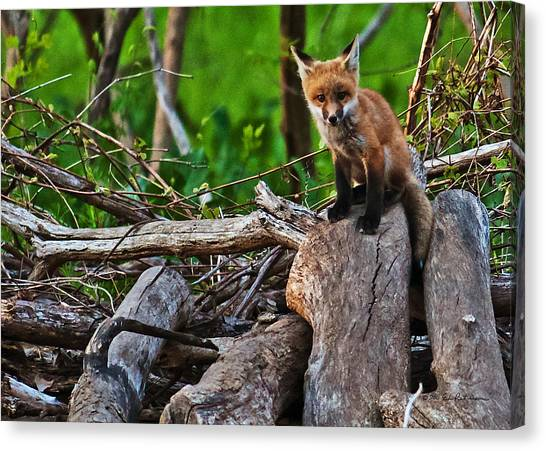 Canvas Print featuring the photograph Baby Fox by Edward Peterson