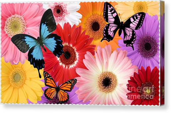 Summer's Desgn Canvas Print