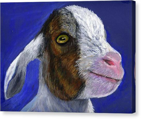 Baby Goat Canvas Print by Angela Finney