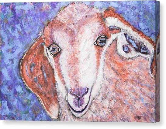 Baby Goat Canvas Print