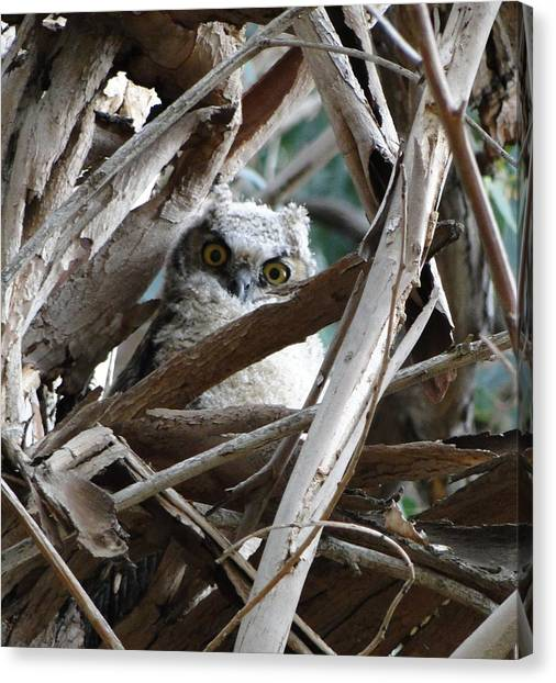 Baby Horned Owl Canvas Print