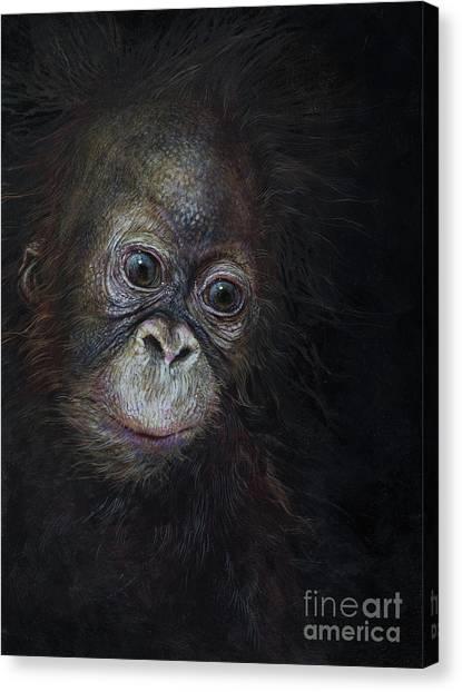 Orangutans Canvas Print - Baby Orangutan Three by Odile Kidd