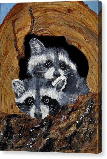 Baby Raccoons Canvas Print by Dia Spriggs