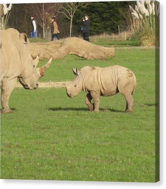 Rhinos Canvas Print - #babyrhino #rhinos #nature #wildlife by Katie Greenwood
