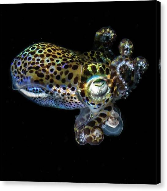 Squids Canvas Print - Babysquid #babysquid #squid #nightsquid by Luigi pietro  Tucci