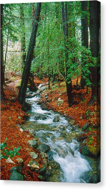 Back Country Creek Canvas Print