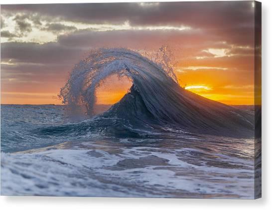 Sea Horse Canvas Print - Back Curl by Sean Davey