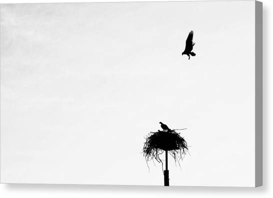 Canvas Print featuring the photograph Back To The Nest by AJ Schibig