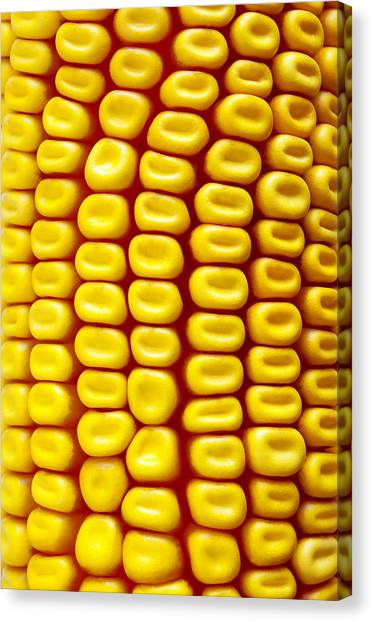 Corn Canvas Print - Background Corn by Carlos Caetano