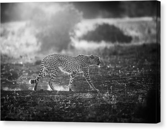 Cheetahs Canvas Print - Backlit Cheetah by Jaco Marx