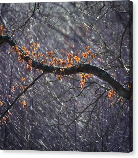 Sherwood Forest Canvas Print - Backlit by Chris Dale