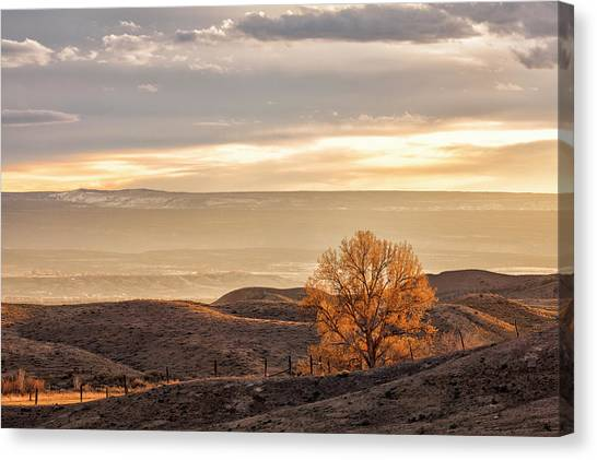 Canvas Print featuring the photograph Backlit Cottonwood by Denise Bush