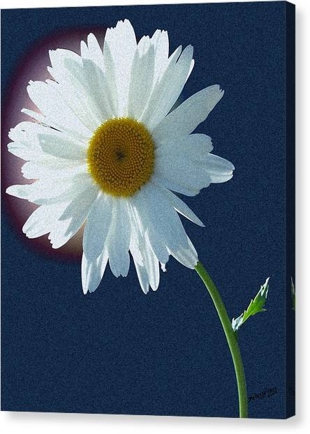 Canvas Print featuring the photograph Backlit Daisy by Deleas Kilgore