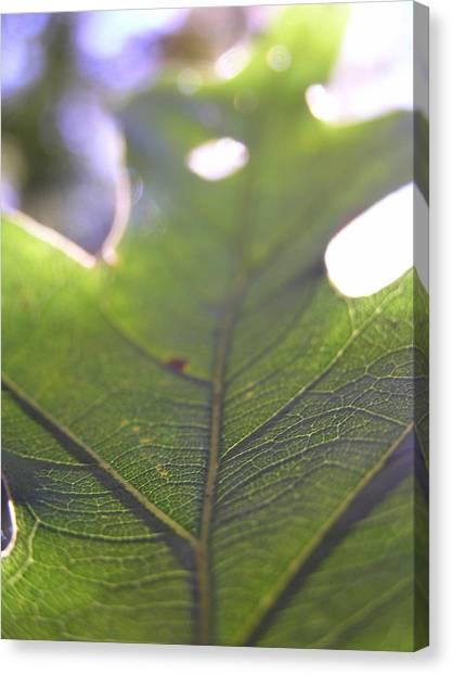 Mountian Canvas Print - Backlit Leaf by Dustin K Ryan