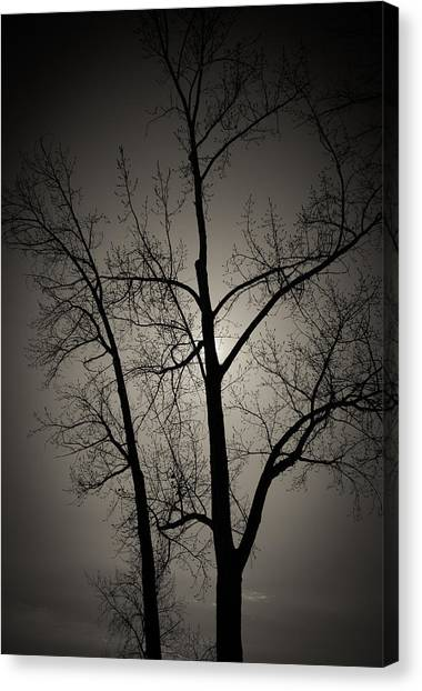 Backlit Trees Canvas Print