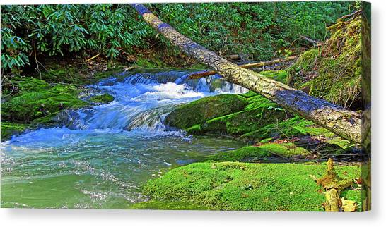 Backwoods Stream Canvas Print