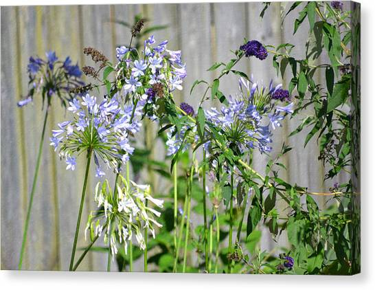 Backyard Flowers Canvas Print