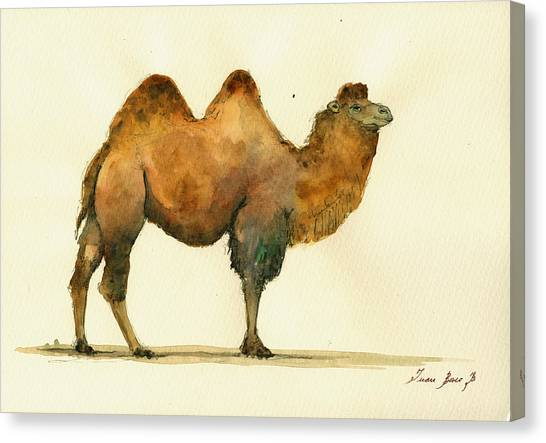 Camels Canvas Print - Bactrian Camel by Juan  Bosco